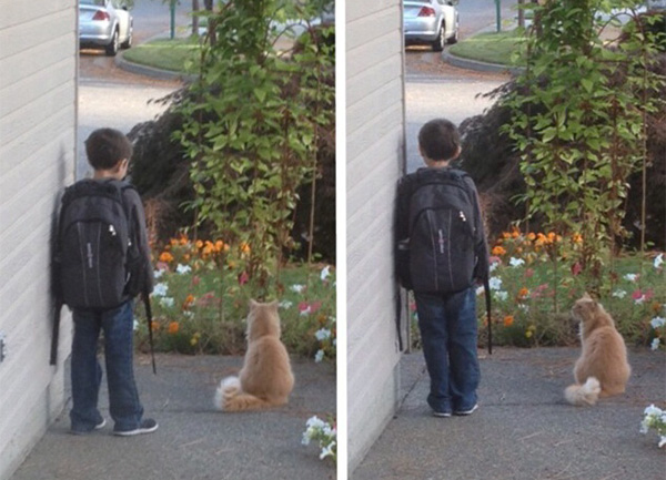 cat waits outside with son for bus