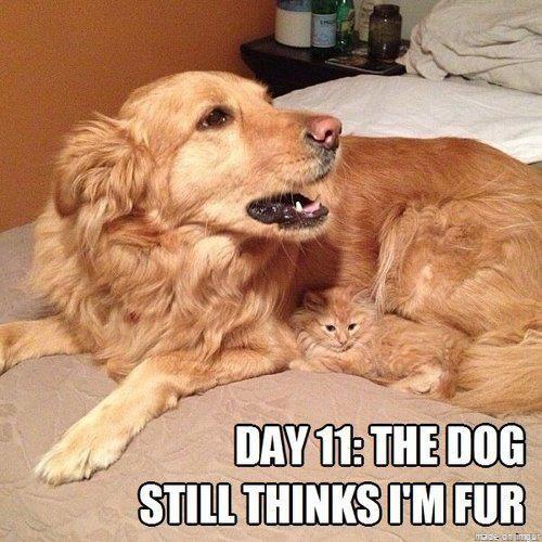 dog fur kitten