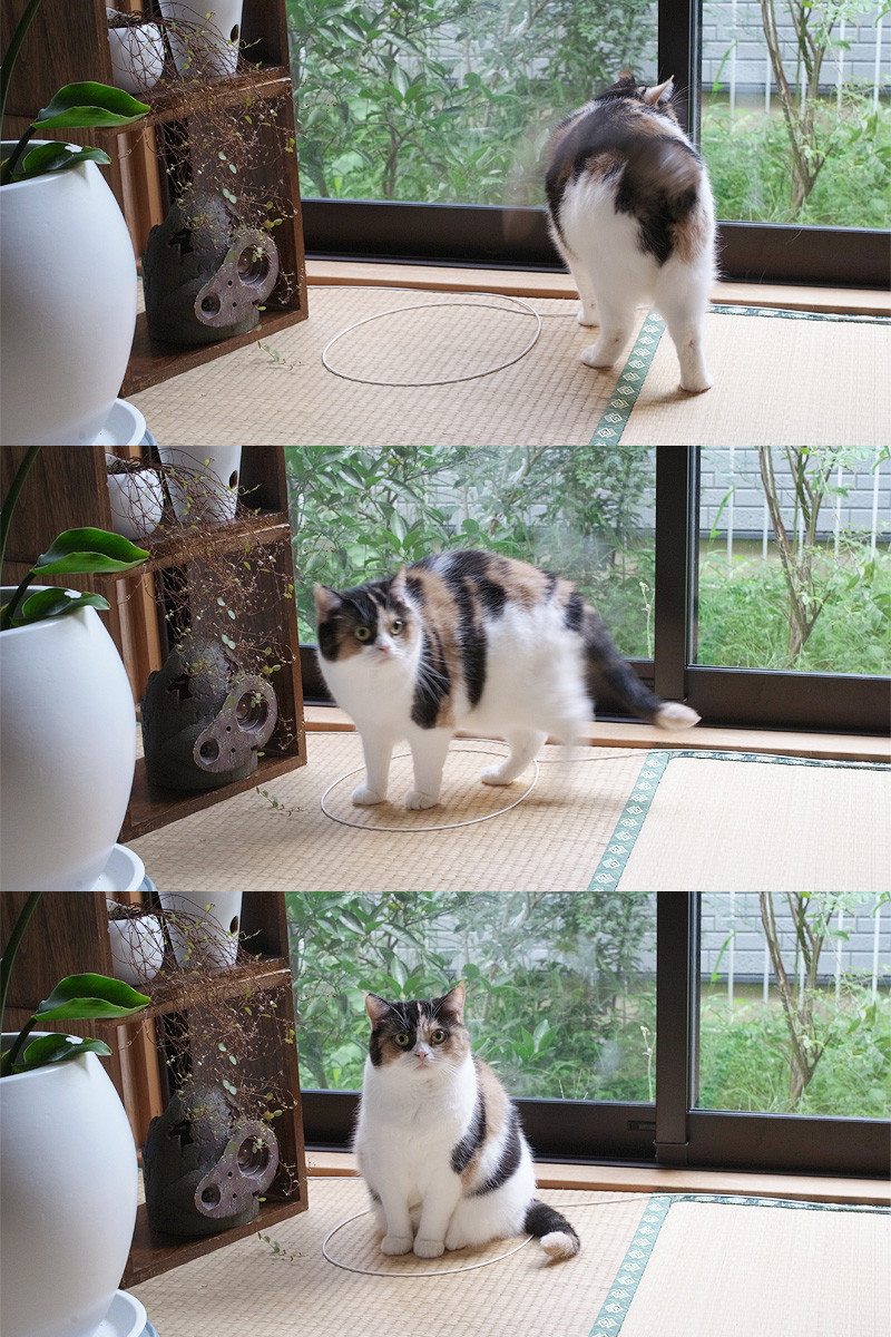 Simple Step By Step Instructions To Catch A Cat It Works Every Time
