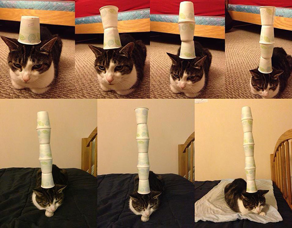 Cats Head Cat Stack Cups on Head