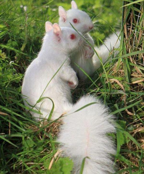 11 Rarely Seen Albino Animals