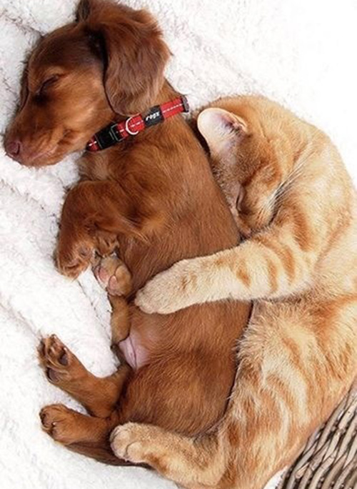kitten and puppy snuggling