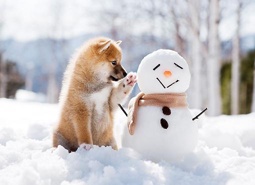 puppy meets snowman