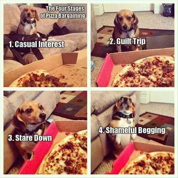 4 stages of begging