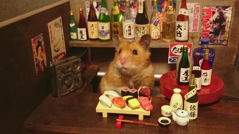 hamster bartender sushi