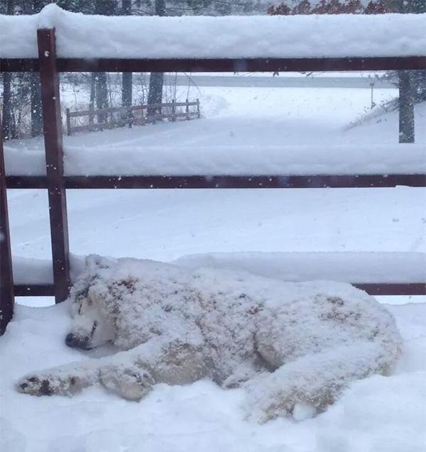dog loves the snow