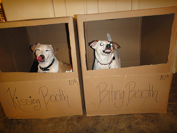 kissing booth biting booth dogs