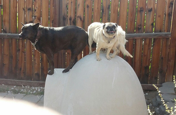 dogs on top of dog house funny