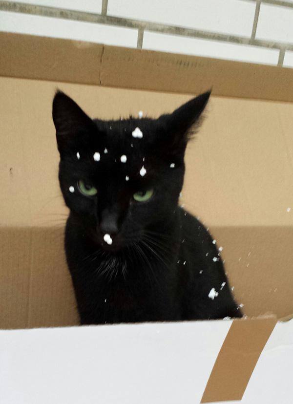cats styrofoam static