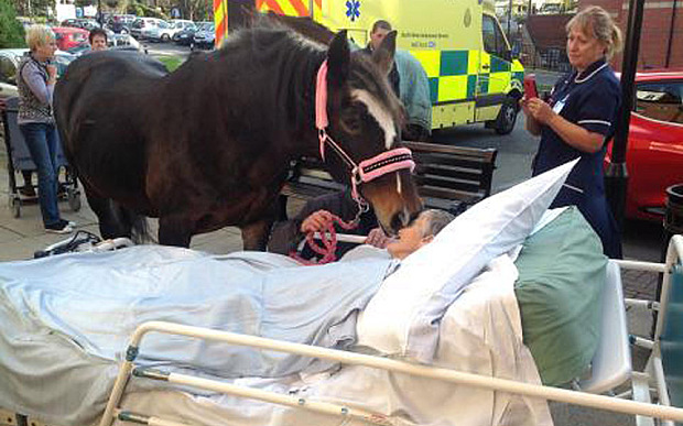 woman sees horse in hospital bed