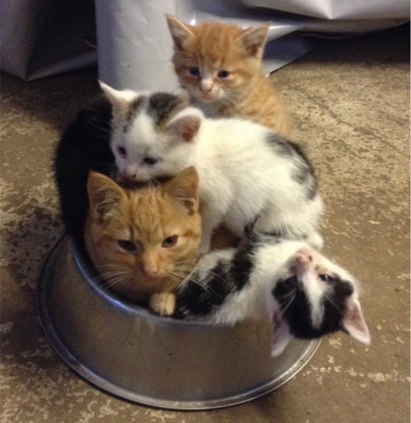 cats in dog food bowl
