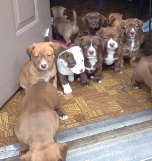 puppies in doorway
