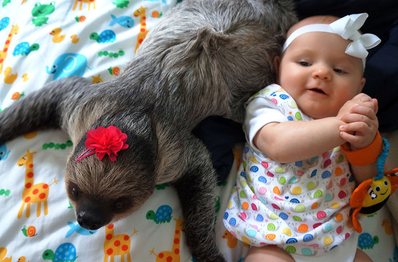 baby and sloth pictures
