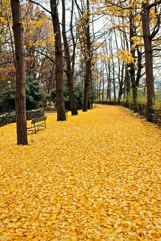 yellow leave pathway