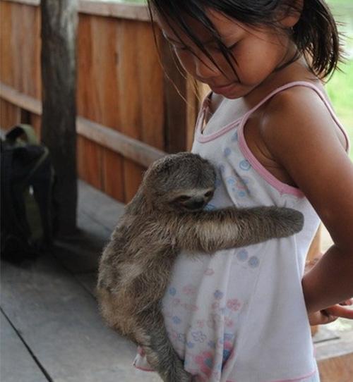 baby sloth hugs little girl