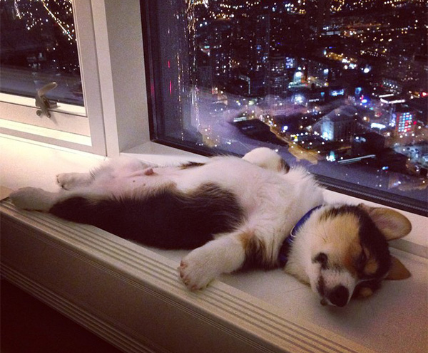 how puppy sleeps on window ledge
