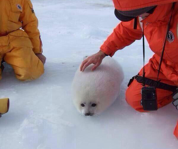 snow ball has a face