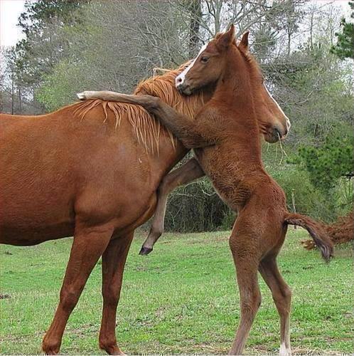 horse hugs mom
