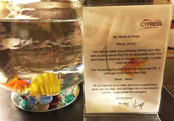 fish at pet friendly hotel