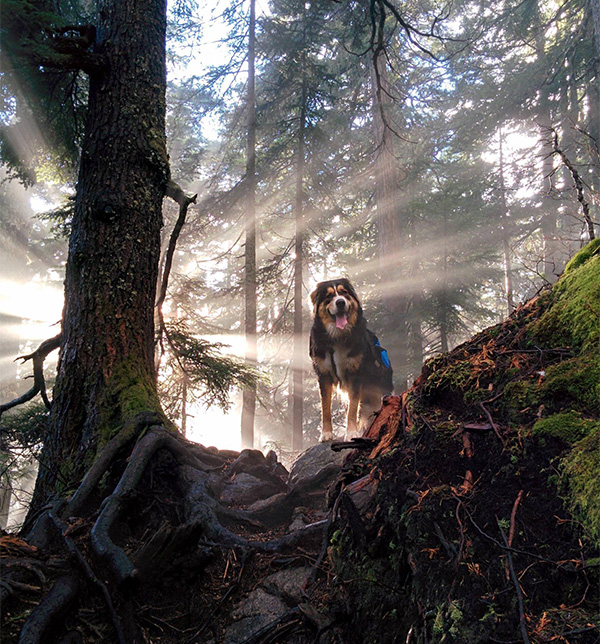 amazing dog photo in woods