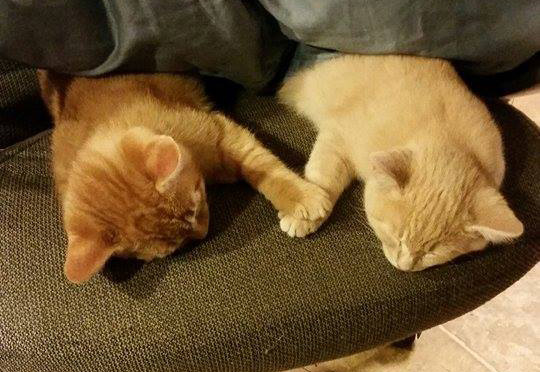cats holding paws