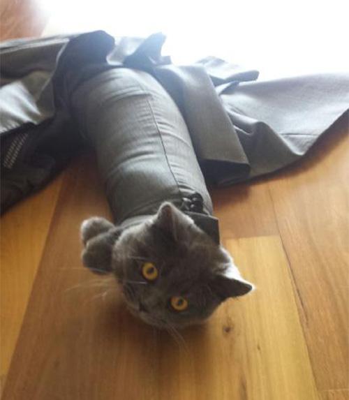 cat in suit jacket arm