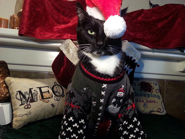 cat in christmas sweater and hat