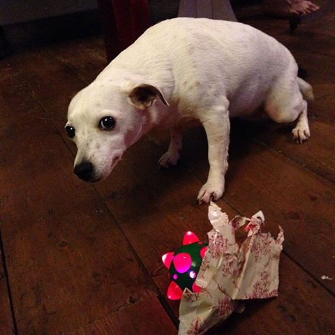 dog opened Christmas gift early guilt