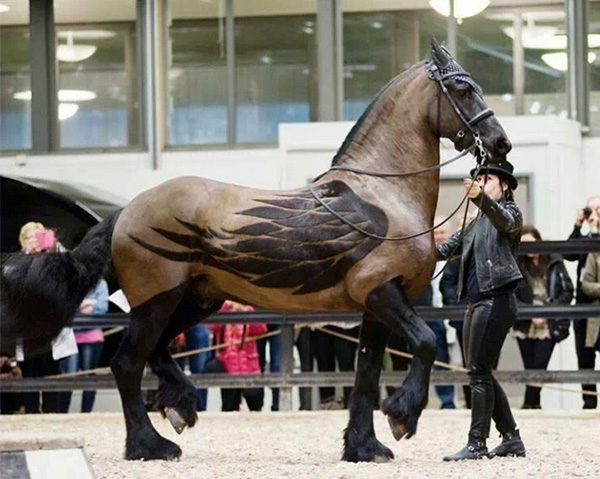 majestic horse with wings shaved
