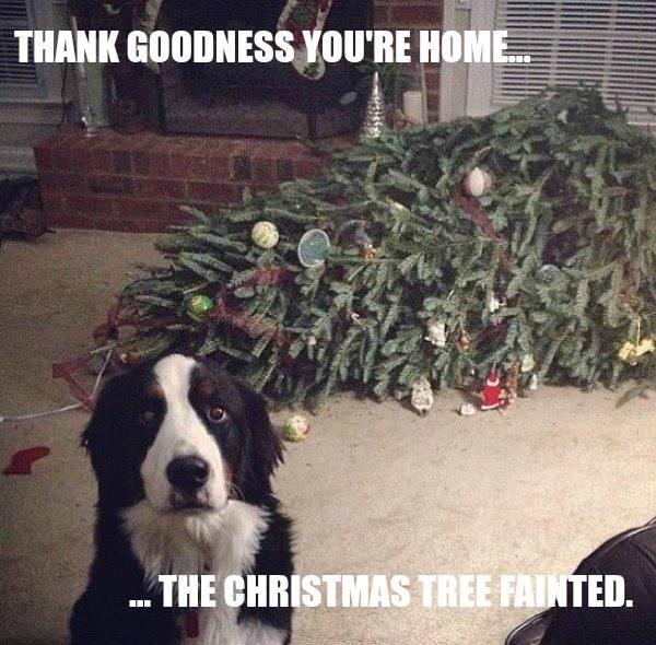 dog funny christmas tree fainted