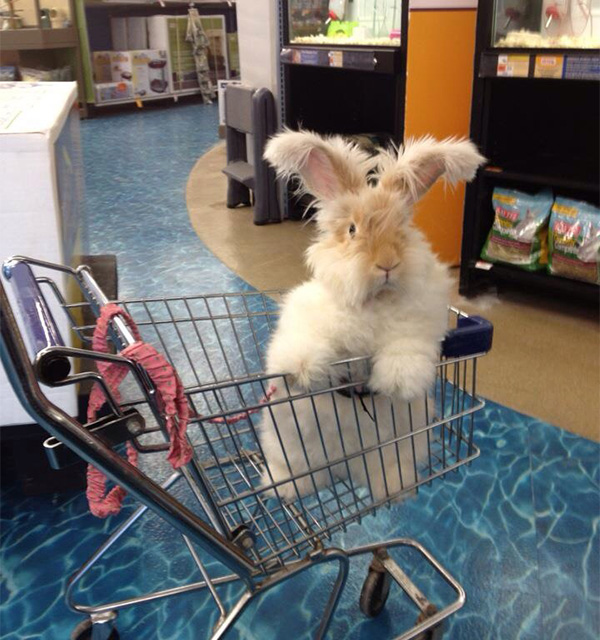rabbit in shopping cart in pet store
