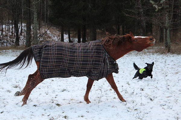 dog and horse playing in the snow