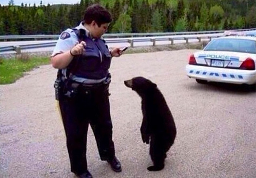bear with cop funny