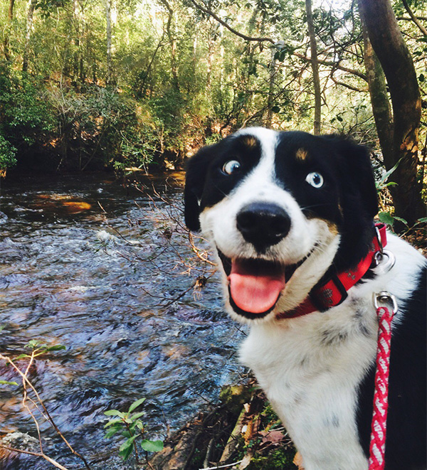 happy dog hiking