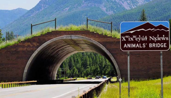 land bridges for animals
