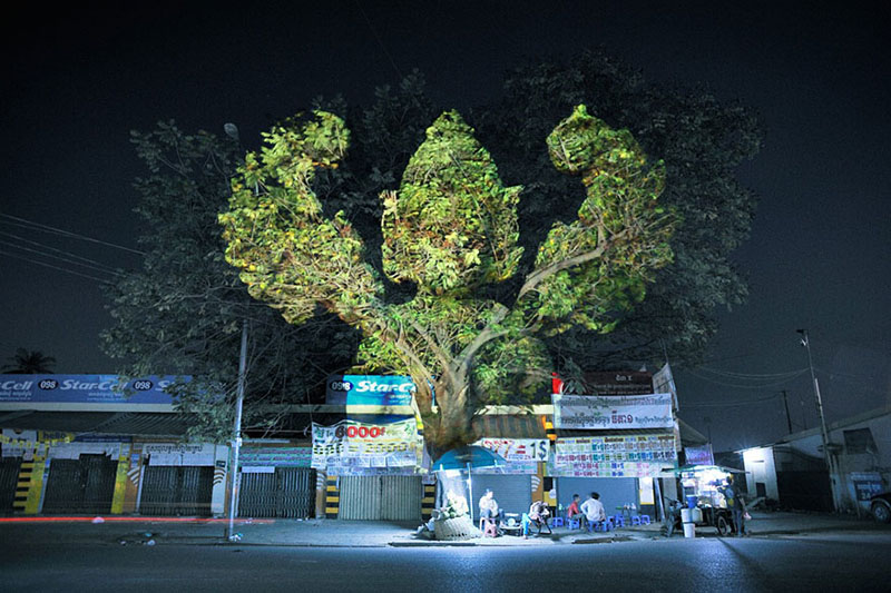 3D projections on trees