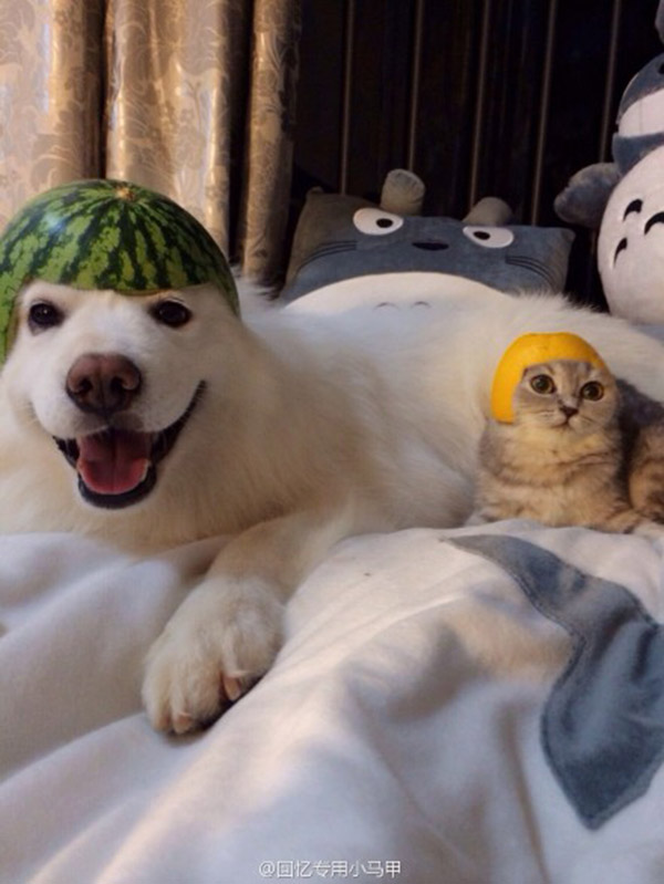 How To Keep Your Pet Safe Using A Watermelon And An Orange