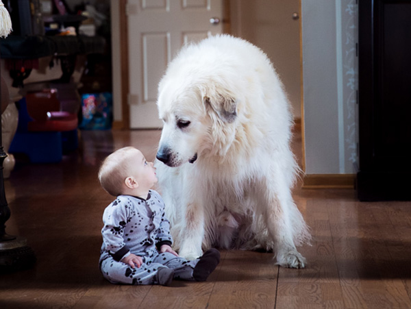 baby looking dog in the face