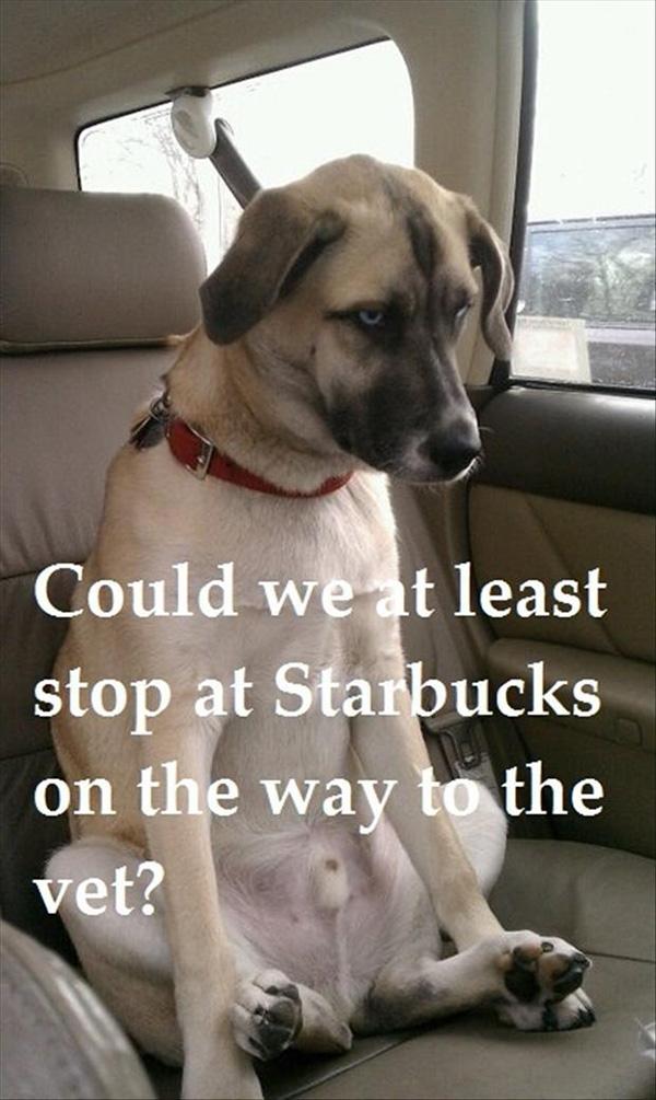 funny dog faces vet