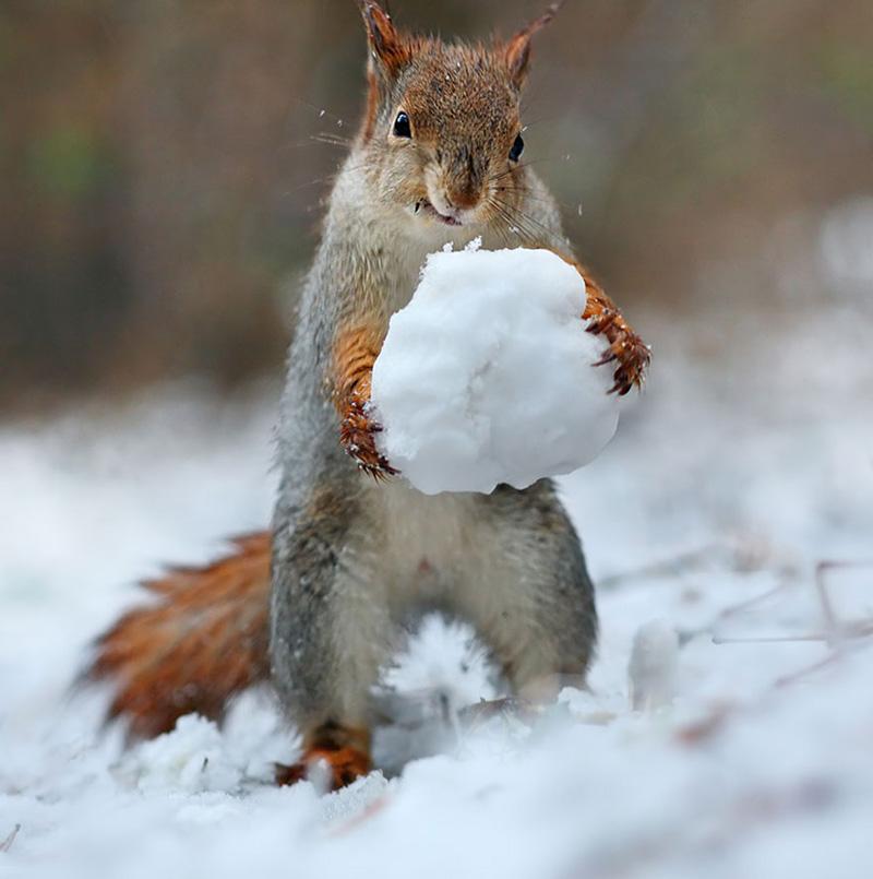 squirrel photo shoot