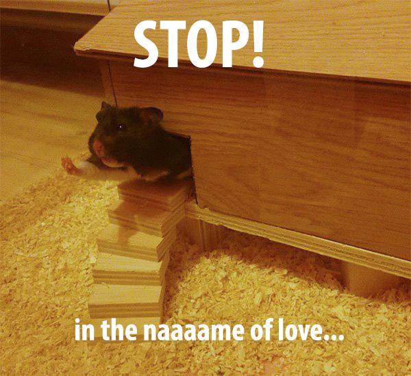 hamster stop in the name of love