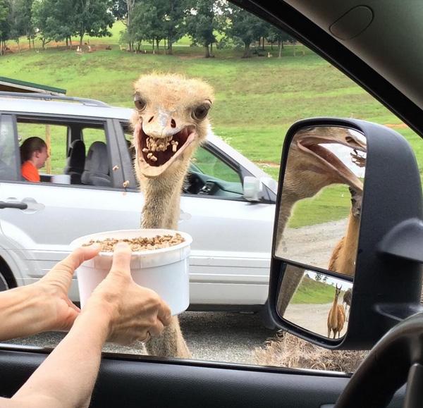 emu funny at safari park
