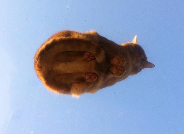 cat on skylight