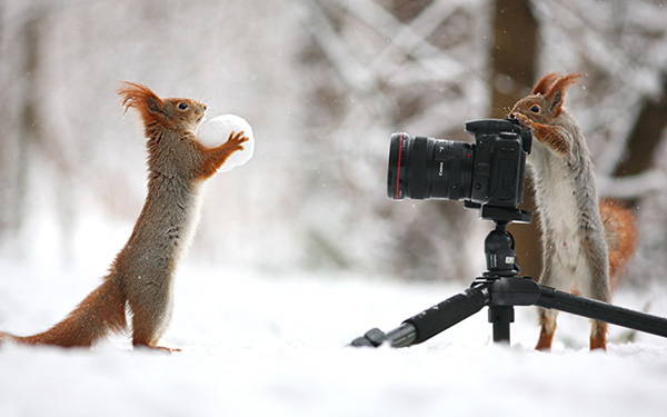 squirrel photo session
