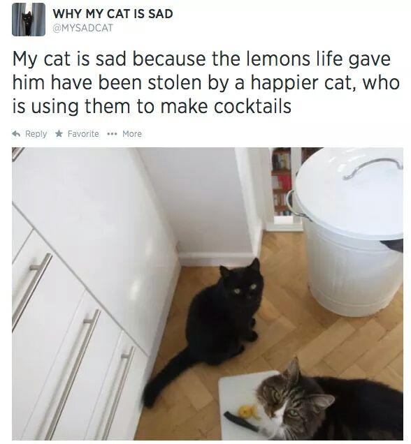 reason my cat is sad