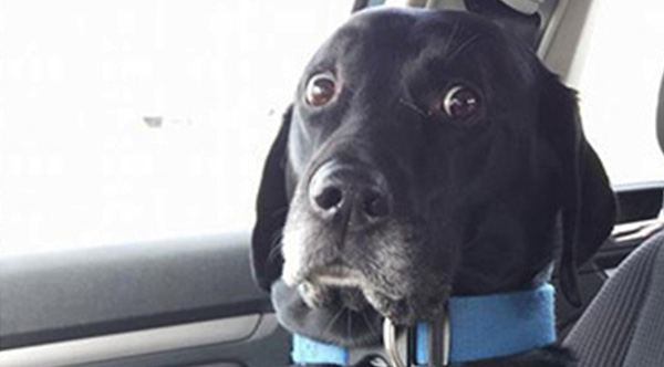 14 Priceless Photos Of Dogs Realizing They Re Going To The