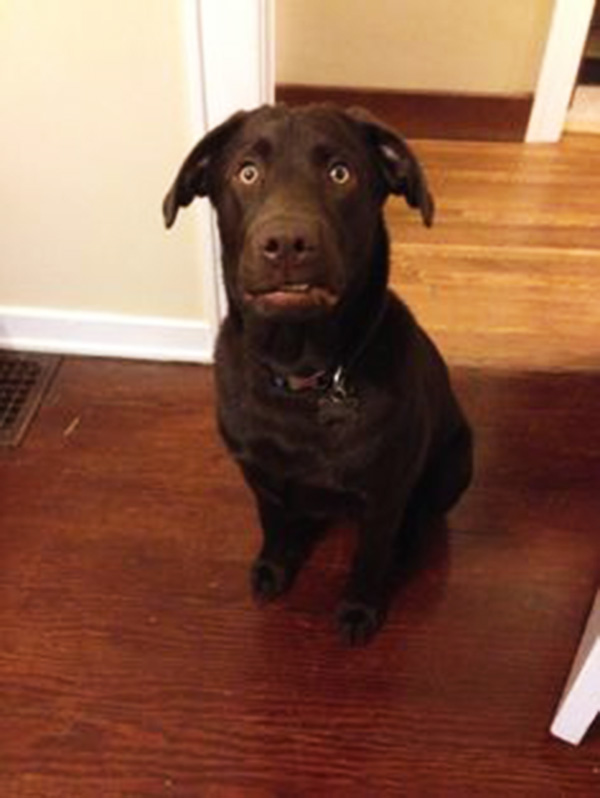 14 Priceless Photos Of Dogs Realizing They're Going To The ...