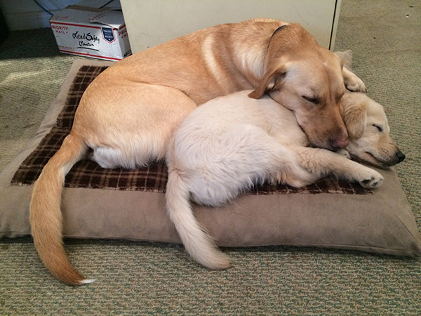 dog snuggling