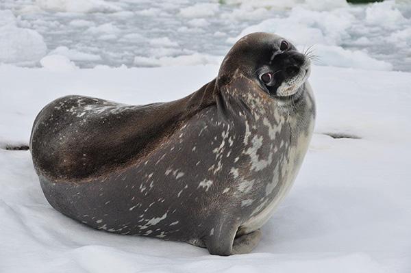seal cute