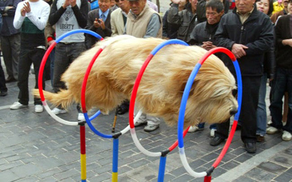 dog rings perfect timing